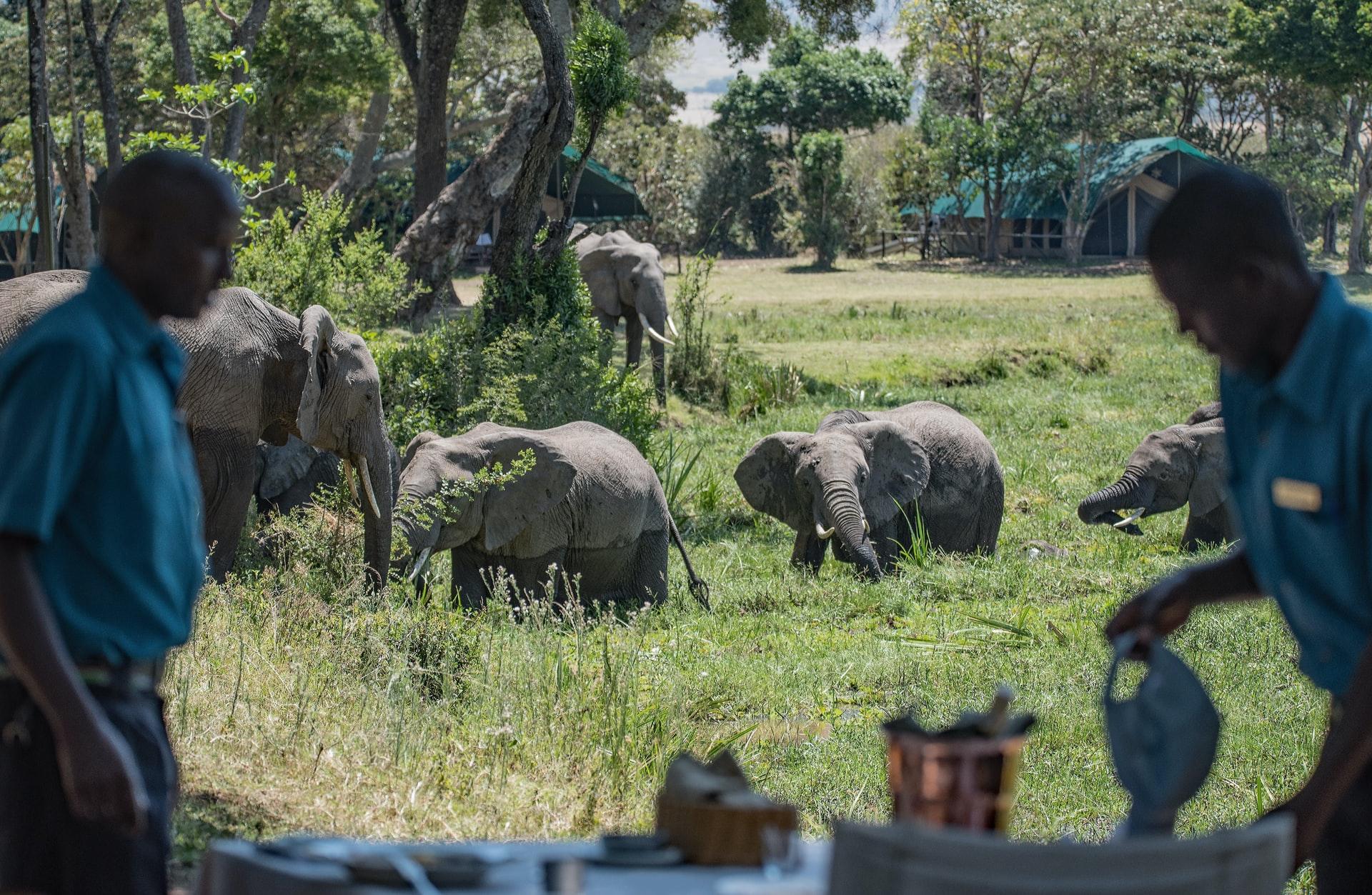 Elephant takeover