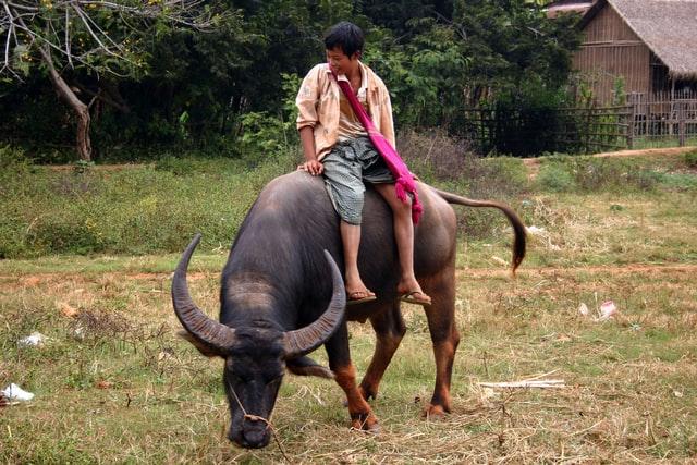 boy sitting on bull